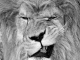 Львовы
